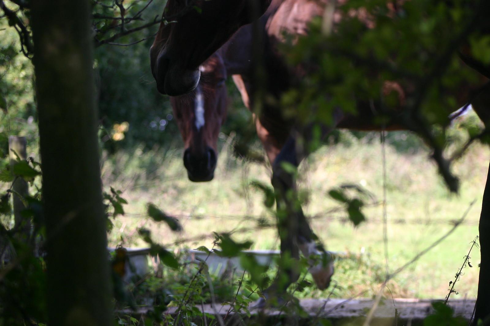 SWC 185 October 6th 2013 Horses