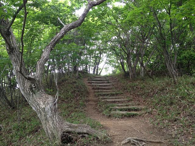 養老山 登山道