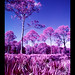 FLA Infrared by Michael Raso - Film Photography Podcast