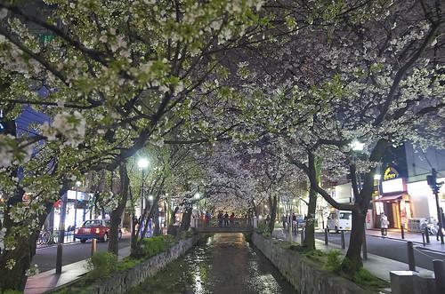 【写真】2014 桜 : 木屋町通/2021-09-17/IMGP5608