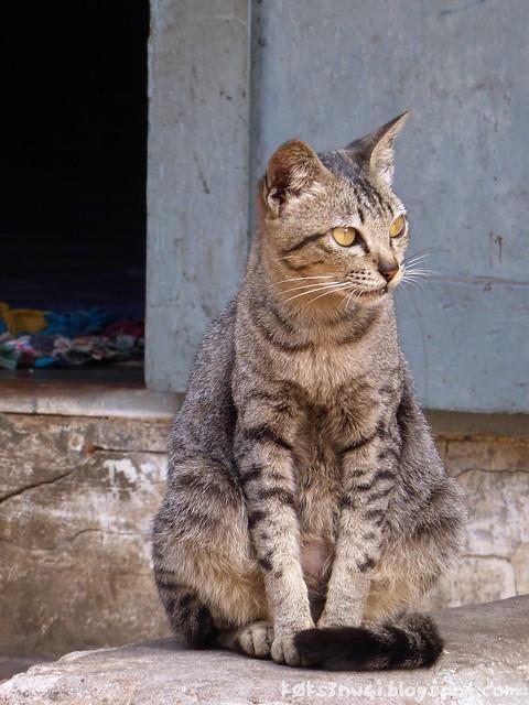 Luang Prabang Cat
