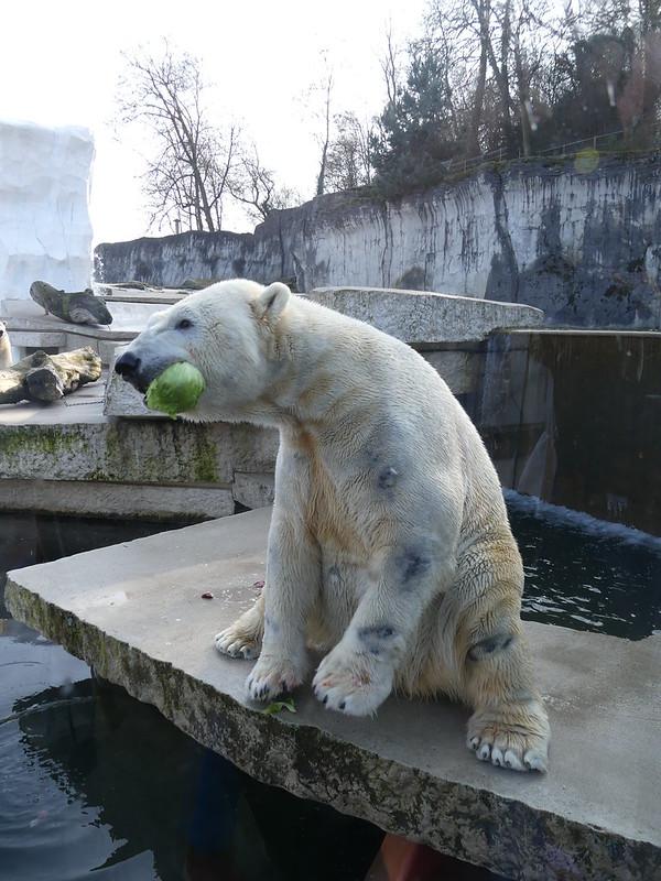 Eisbär Vitus, Karlsruhe