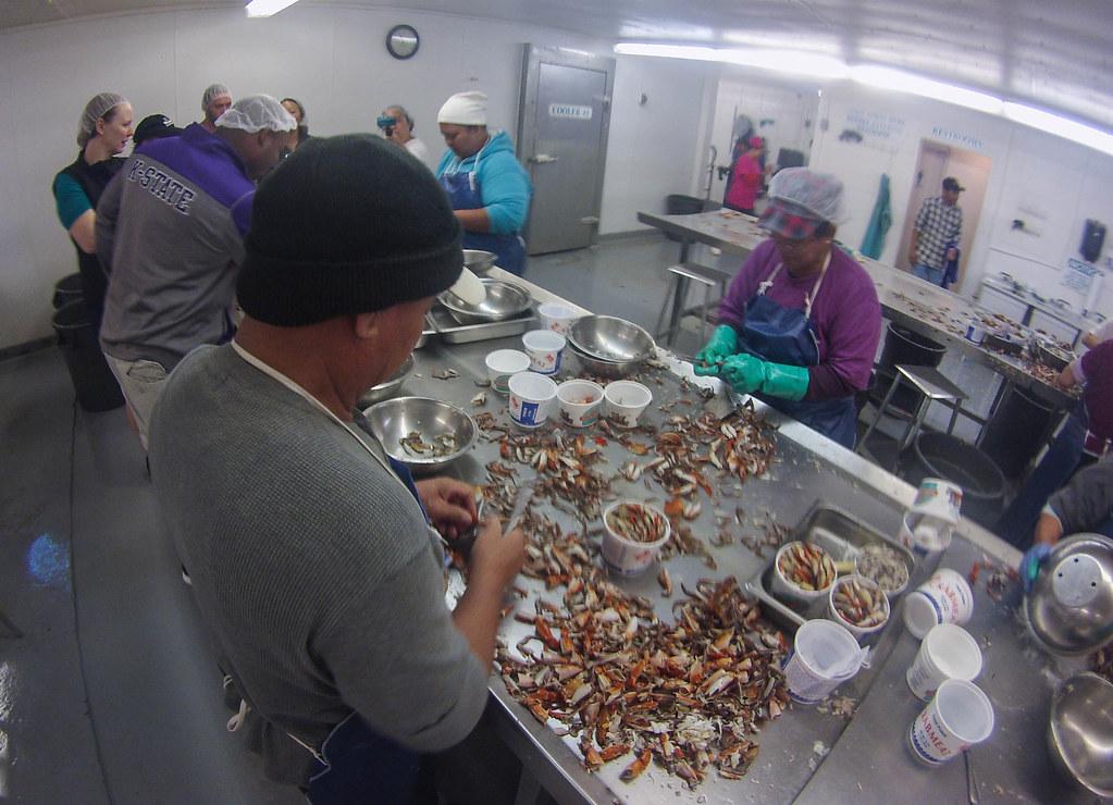 Crab Pickers at Olympic Shellfish in Bayou la Batre, Alabama, during the World Food Championships Blogger Summit, Orange Beach, Ala., Nov. 7 - 9, 2016.