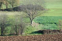 One tree, Domain La Poujade - Photo of Vailhourles