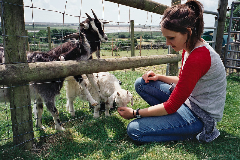 Hannah and Goats
