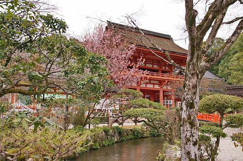 【写真】2013 桜 : 上賀茂神社/2020-09-09/IMGP9511