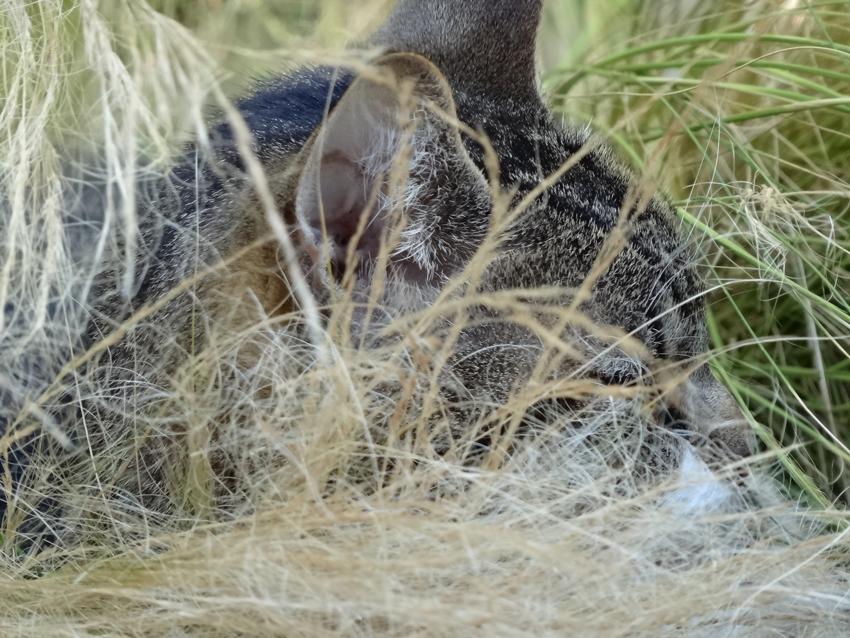 tabby-in-grass-head-shot