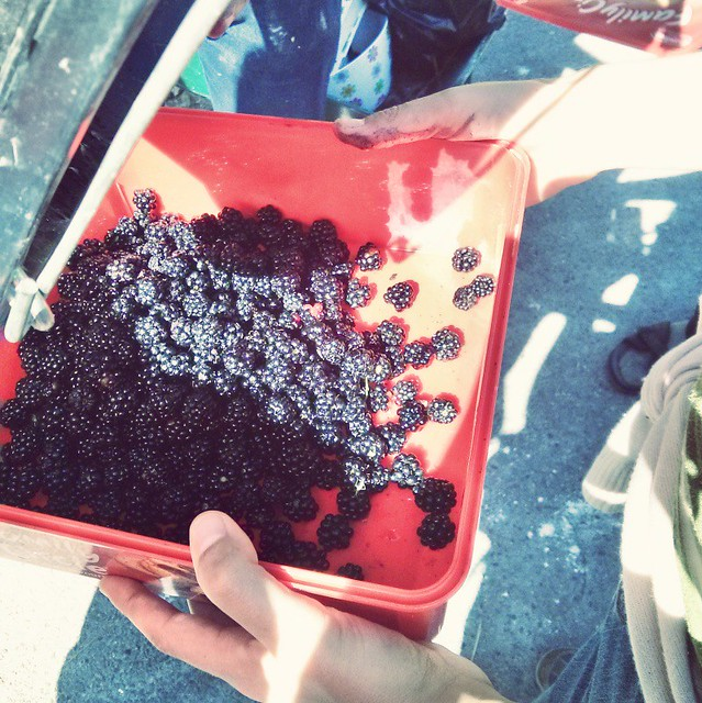 Box of berries