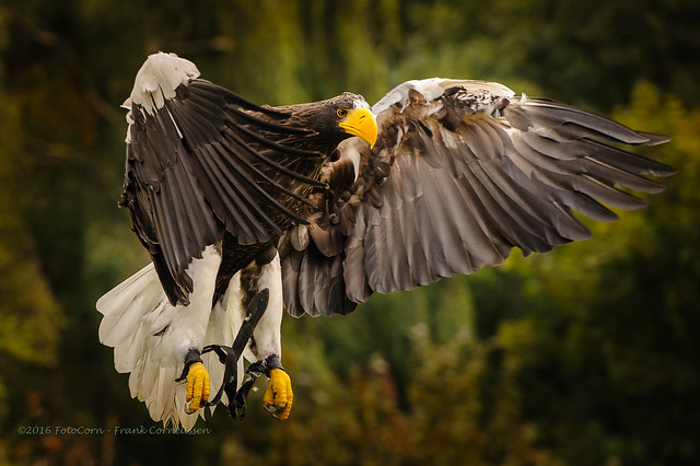 The landing of the Eagle