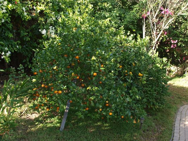 M8156940 citrus salad mandarin valencia orange bearss lime