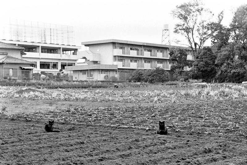 Soil of Tokyo