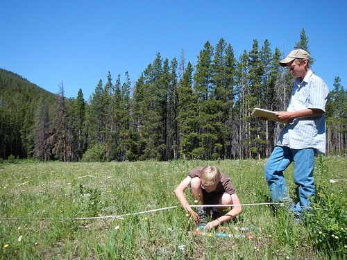 Two students with the Youth Forest Monitoring Program monitor the impact of weeds in a meadow near Webb Lake in the Scapegoat Wilderness. Forest Service photo.