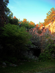 Tree Caves