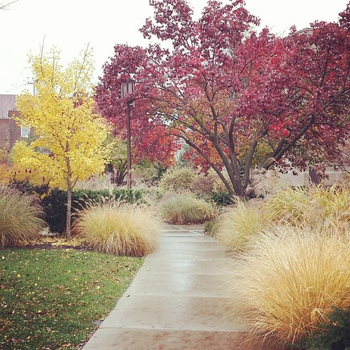 Northwestern University on a cold, windy, rainy day. Glorious little pockets of trees and native grasses.