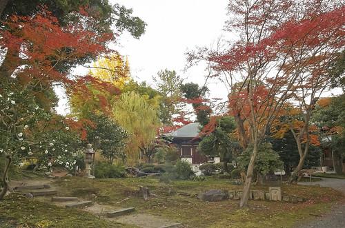 【写真】2013 紅葉 : 白沙村荘/2020-12-28/IMGP3709