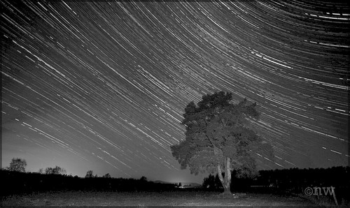 Scotch Pine Star trails b&w