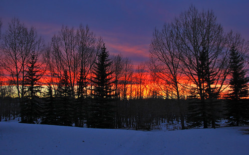 Intense Winter Sunset Through Trees
