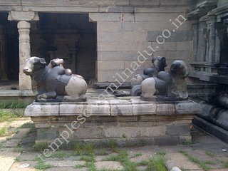 Four nandis in front of Brahma's Idol. Thirumazhapadi Vaithyanathaswamy Temple