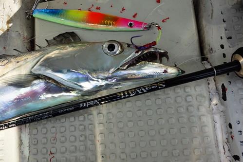 安ジグ&太刀魚
