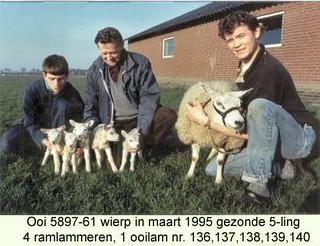 Ooi 5897-61 - ramlammeren 136 - 137 - 138 - 139 ooilam 140 - 1995