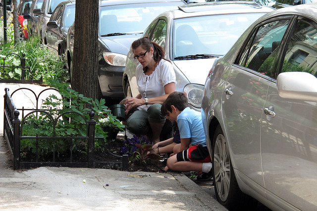 Gardening in street tree beds, like this one at 8th Street between 7th and 8th Avenues, is a great way to get kids involved in greening your community. Photo by GreenBridge staff.
