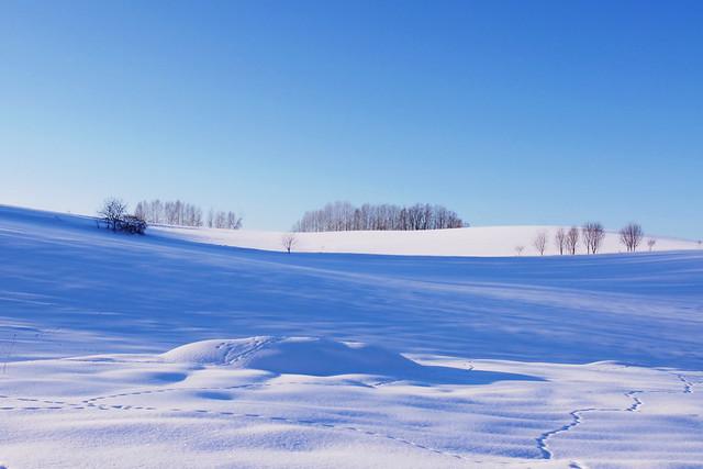 白と青の楽園