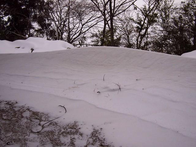 2014.2.8 雪