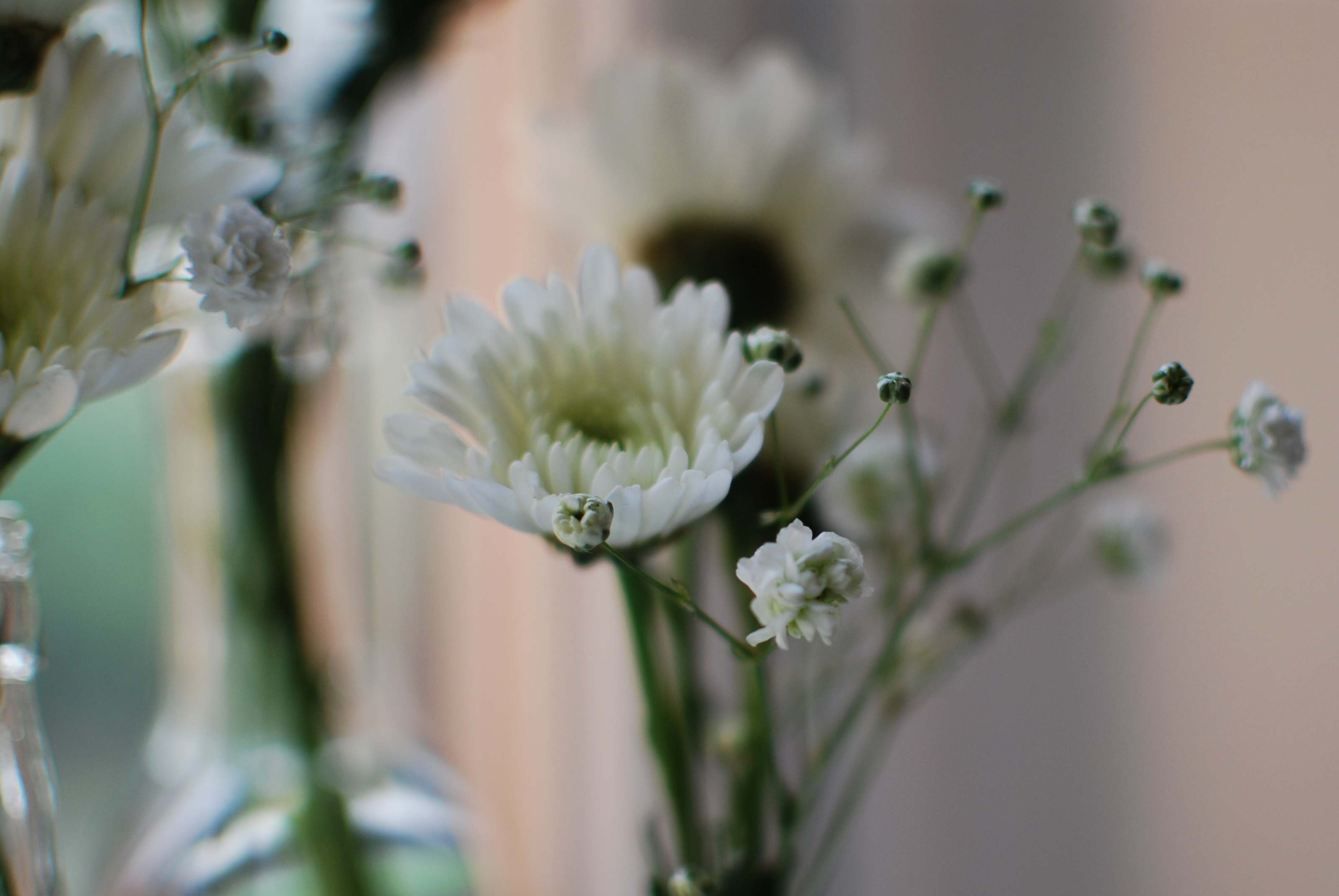 chambray and curls gyspsphilia baby's breath and crysanthemums