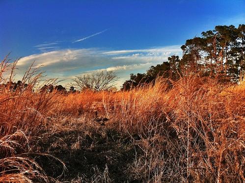 trees sunset nature forest landscape outdoors grassland