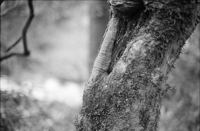 苔が生える木 - Tree that grows moss