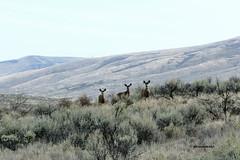 Wenas Wildlife Area, Roza Creek Area