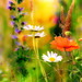 Summer meadow [Explore] by Fotokunst Susanne