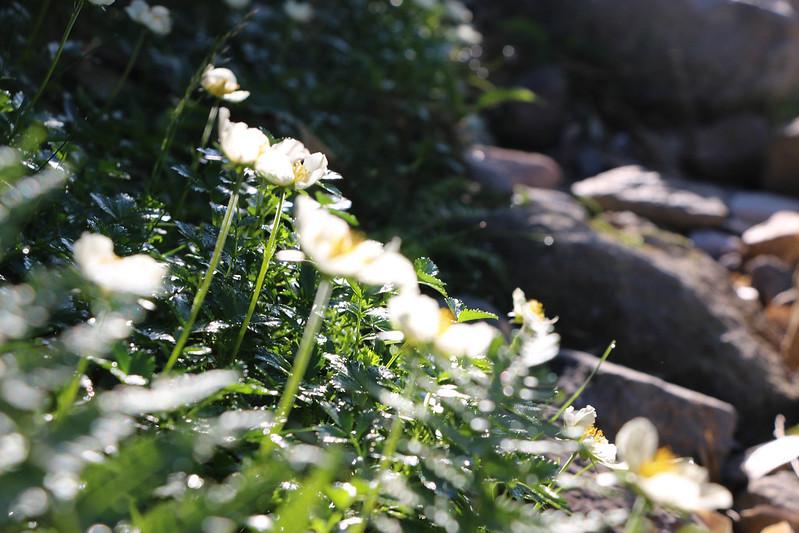 2014-07-20_00439_北海道登山旅行.jpg