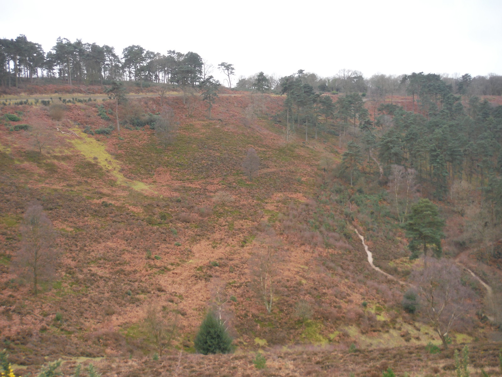 Devil's Punch Bowl SWC Walk 144 Haslemere to Farnham