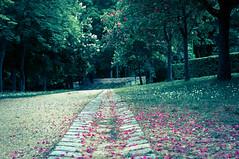 Arbres en fleur au printemps / Flowering trees in spring