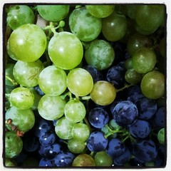 plant(0.0), sultana(0.0), bilberry(0.0), zante currant(0.0), berry(1.0), grape(1.0), produce(1.0), fruit(1.0), food(1.0),