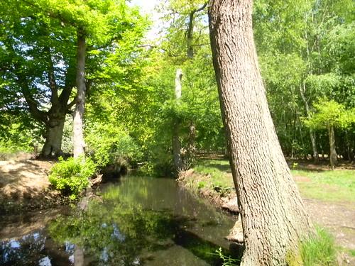 Hartleycourt Moat, Burnham Beeches