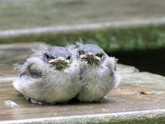 Birdies-3