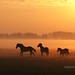 Wild west in Holland by betuwefotograaf
