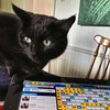#Frey got bored of Words with Friends. #cat #ipad #game