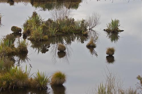 light newzealand reflection water canon landscape swamp otago berwick tussock wetland sinclairwetland