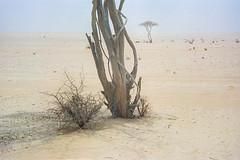 Bleak Desert III