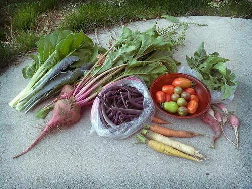 2013.08_some harvest