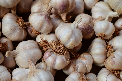Garlic by pjpink