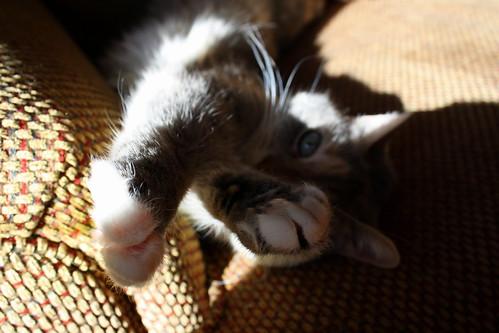 [175/365] Cat Nap
