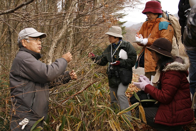 ヤマボウシの枝の出し方について説明する斎藤先生.