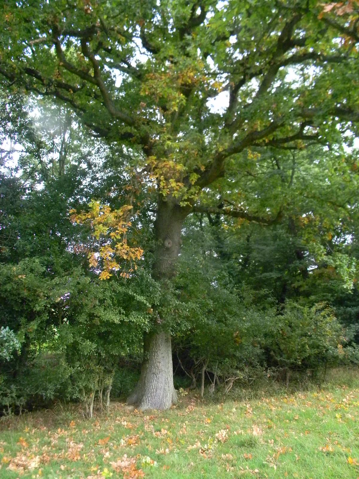 Oak Hever to Ashurst