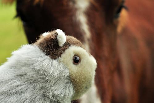 Herreninsel Herrenchiemsee Koppel Pferdekoppel Wandern Wanderwege Pferd Murmeltier Karla Kunstwadl