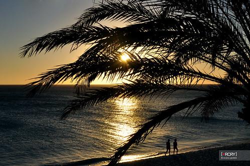 ocean trees sunset sea tree beach water aruba palmtree caribbean divi tamarijn