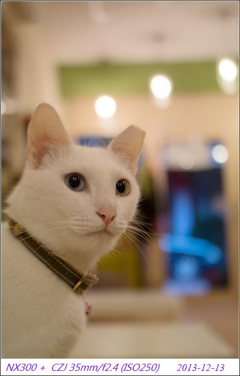 壁纸 动物 猫 猫咪 小猫 桌面 470_736 竖版 竖屏 手机